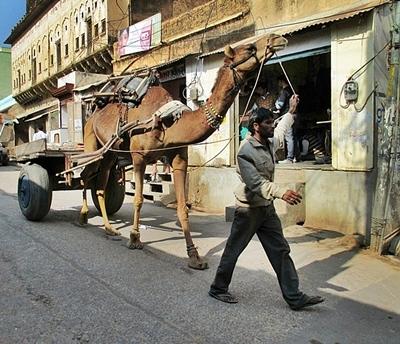 Mann mit Kamel